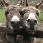 112vet Donkey