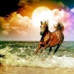 112vet Horses_