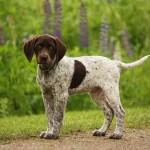 112vet dog (4)