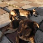 112vet dog (5)