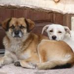112vet dog (6)