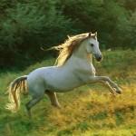 112vet horse