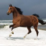112vet horse-sea