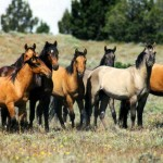 112vet horses-wild