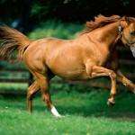 112vet running_horse1