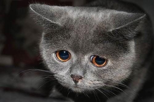 112vet sad-cat